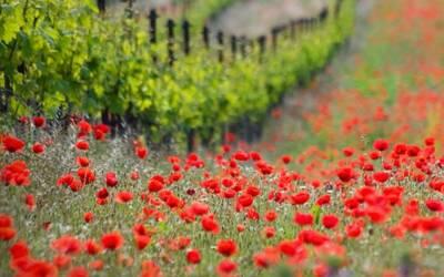 Mołdawia – kraj winem płynący