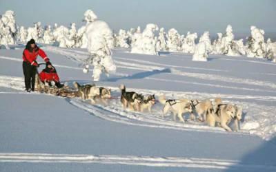 Laponia. Śnieżne safari i zorza polarna