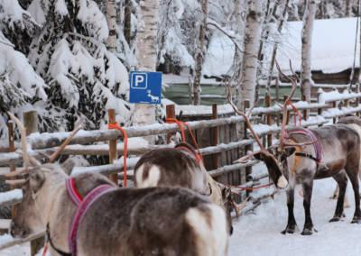 Laponia parking dla reniferów