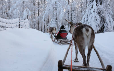Laponia – Z wizytą u Mikołaja