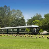Rovos Rail, wagon obserwacyjny, safari