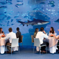 majorka restauracja