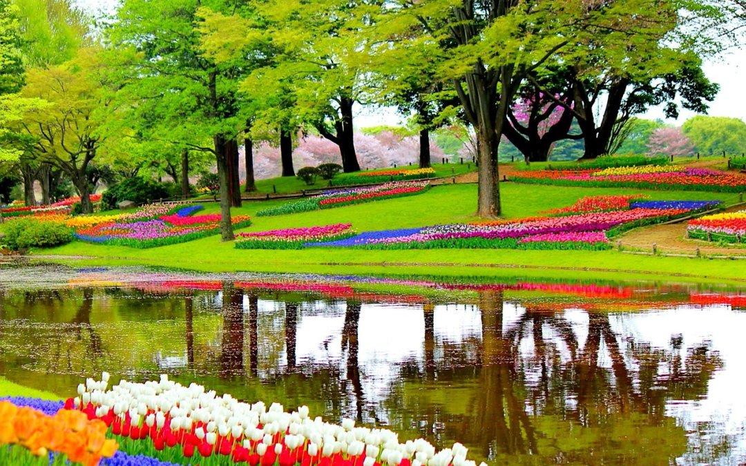 Weekend majowy – Wycieczka objazdowa po Holandii