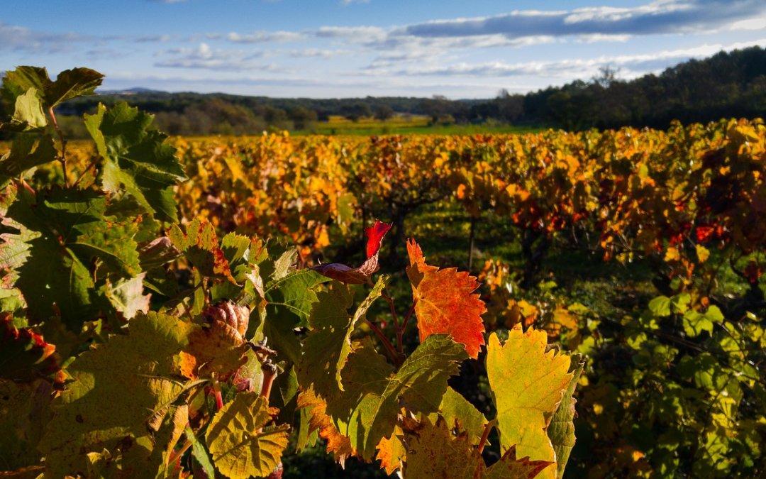 Jesienny wyjazd incentive travel śladami winnic