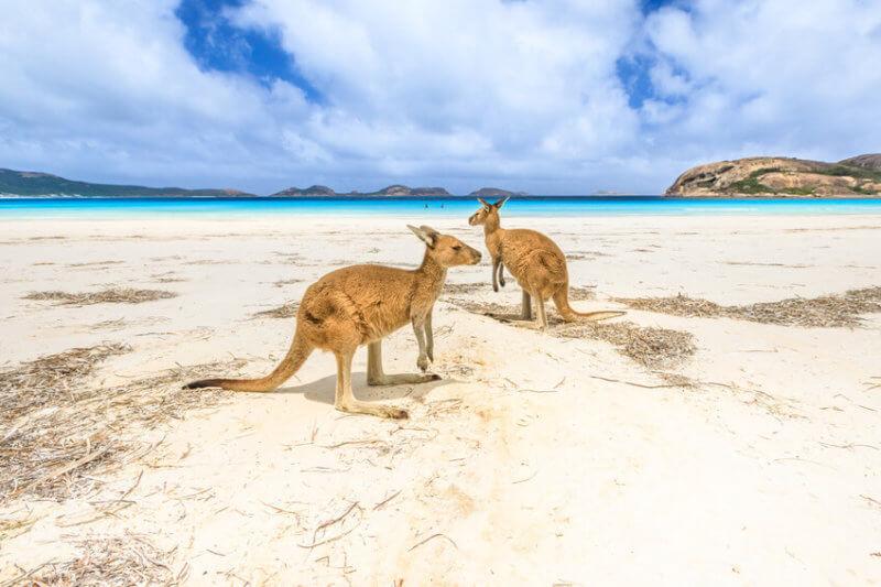 wyjazd do Australii