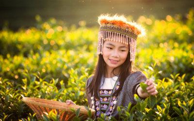 Incentive Bissole: odkryj daleką Azję!