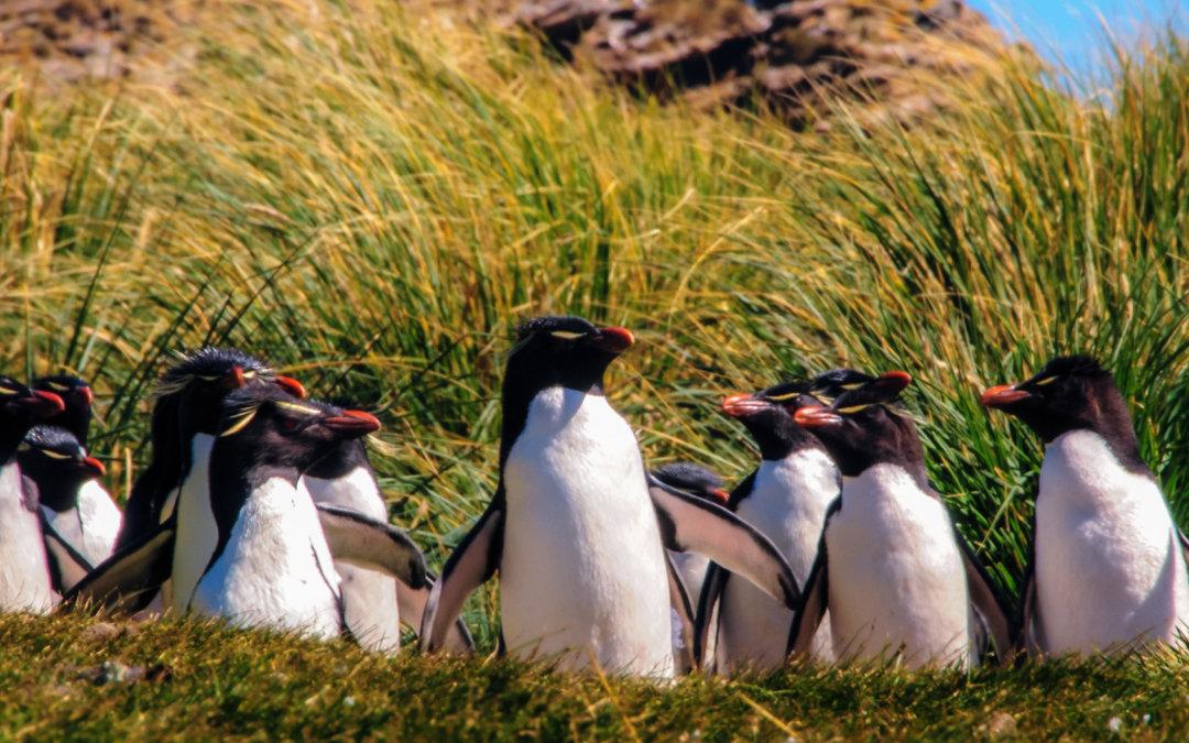 Falklandy – podróż na koniec świata